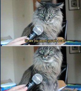sir-are-you-aware-you-are-a-cat