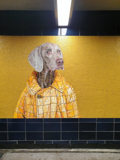 William Wegman 1