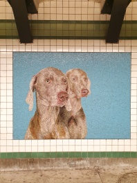 William Wegman 2