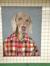 William Wegman 4